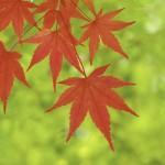 秋に使えるキャッチコピーのヒント【季節のキャッチコピー】
